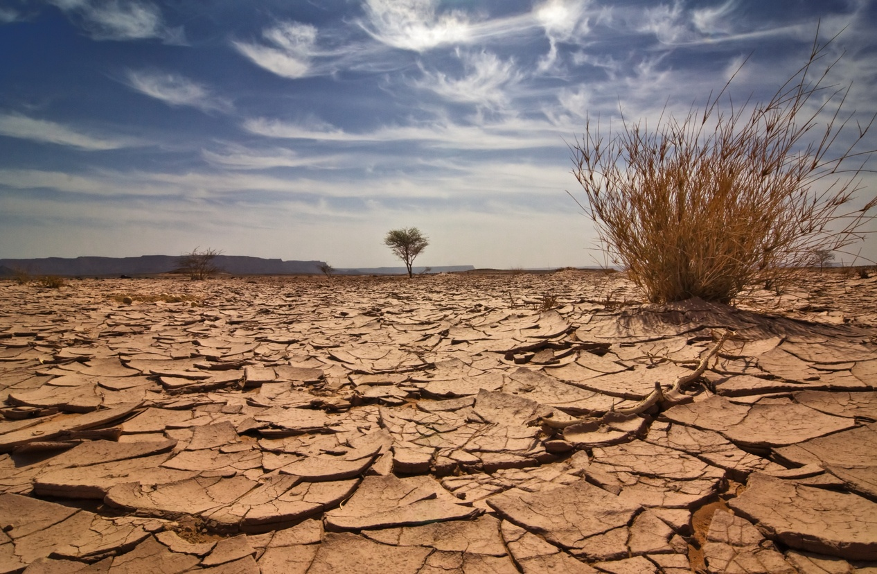 content drought.jpg