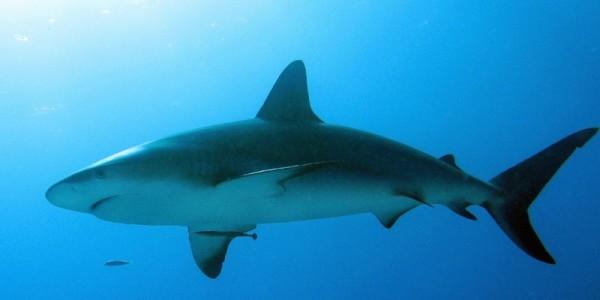 shark-dive-2012-600x300.jpg